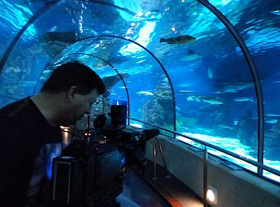 Lab24 - Durmiendo con tiburones