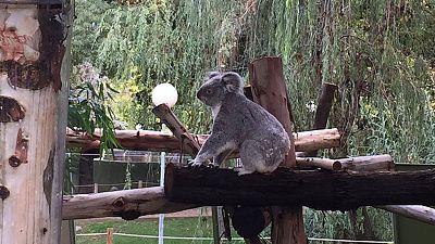 Un día en el zoo de Madrid