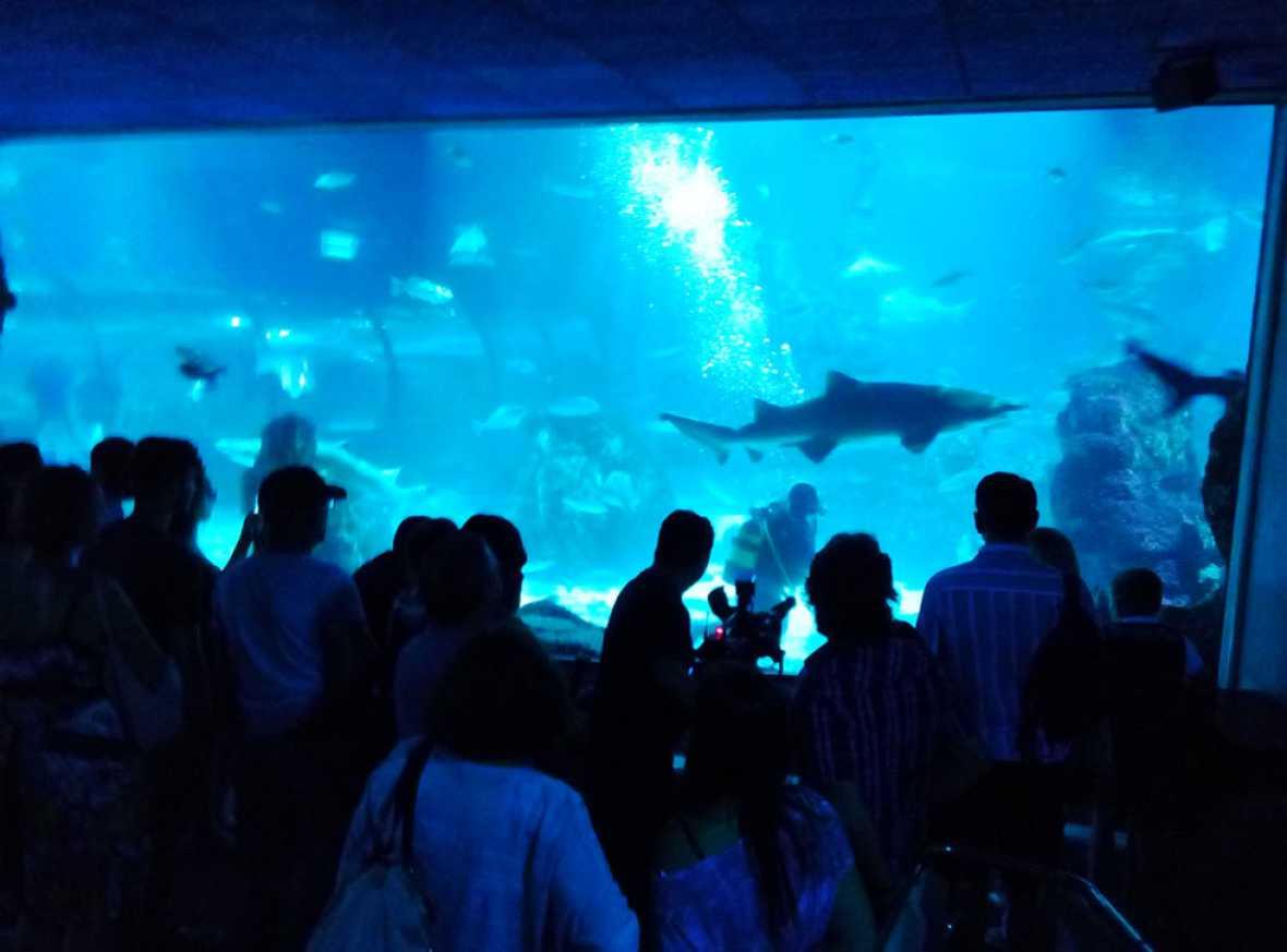 Lab24 - Física de vanguardia y durmiendo con tiburones