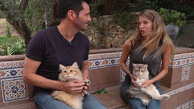 �Produce alergia el pelo de los gatos?
