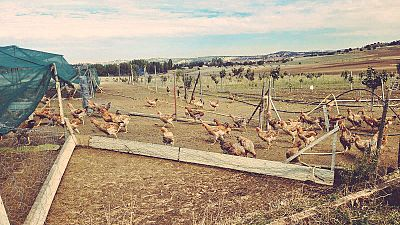 Vivir de otro modo: una granja ecológica