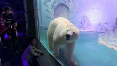Un millón de personas pide la libertad para el oso más triste del mundo