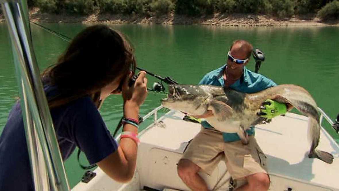 Jara y sedal - Pesca del siluro en Mequinenza - ver ahora