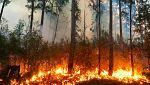El bosque protector - Incendios forestales