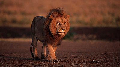Grandes documentales - Juego de leones - ver ahora