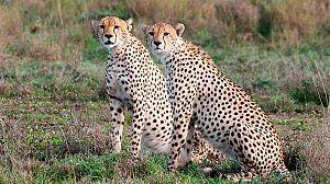 Sobrevivir en el Serengeti
