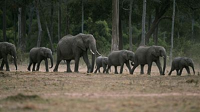 Grandes documentales - África salvaje: Los elefantes de Mashatu - ver ahora