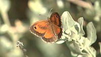 El escarabajo verde - Alas de luz - ver ahora