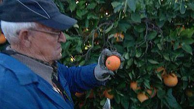 Agrosfera - 24/12/16 - ver ahora