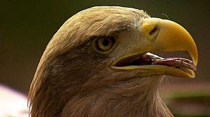 Águilas, Reinas de los cielos