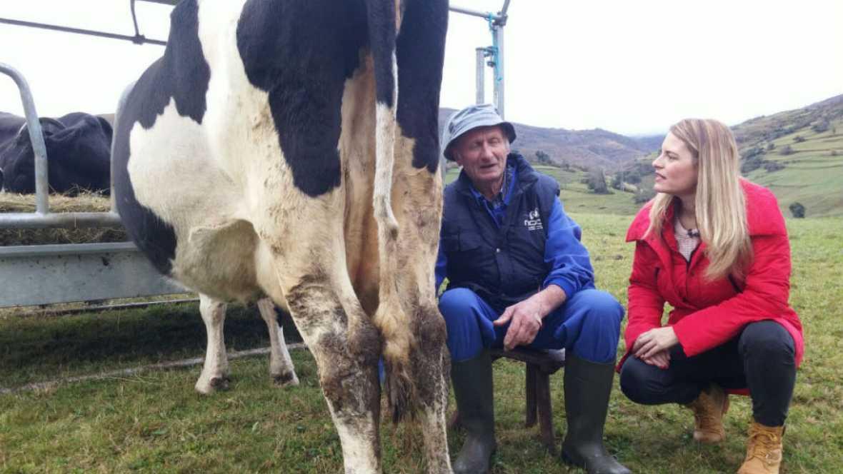 Paco y la vaca lechera