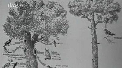 El planeta azul - El bosque