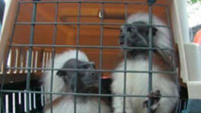 El 'negocio' del tráfico ilegal de animales exóticos