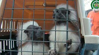 El negocio del tráfico ilegal de animales exóticos en Colombia