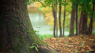 Terrinches, primer pueblo en obtener el certificado de la Asociación Áreas Verdes