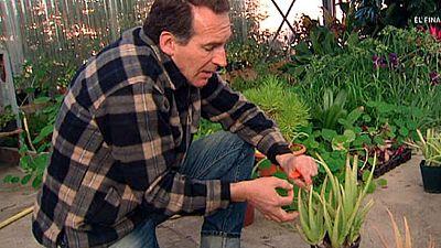 Aloe vera, la planta mágica