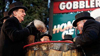'Habló' la marmota Phill en el día de su onomástica en EE.UU