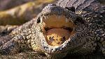 Grandes documentales - Secretos de la Australia salvaje: La laguna
