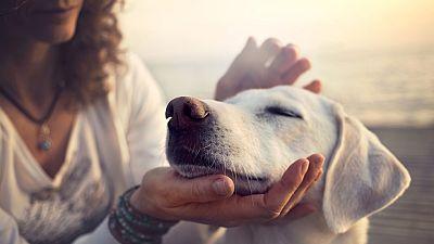 La mascotas son solo cosas para el Código Civil