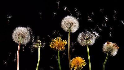 Los alérgicos ya han comenzado a sufrir molestias por el polen
