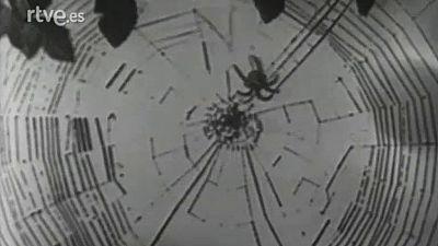 El planeta azul - Las arañas