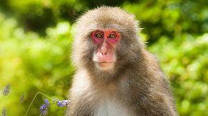 Japón salvaje: Honshu