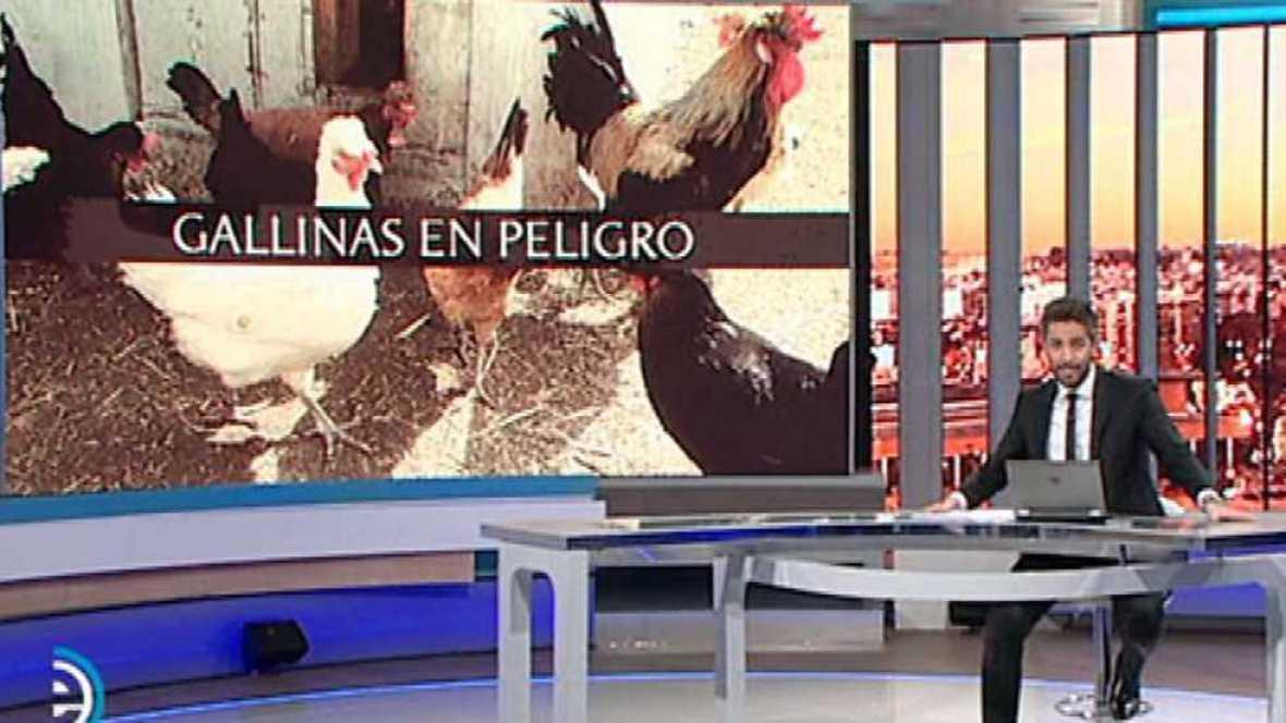 España Directo - 21/02/17 - ver ahora