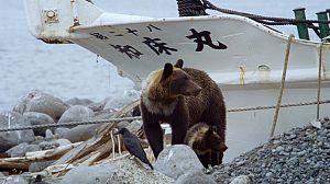 Japón salvaje: Las islas del Sudoeste