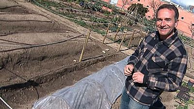 ¿Cómo podemos cultivar remolacha?