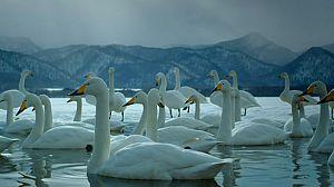 Japón salvaje: Hokkaido
