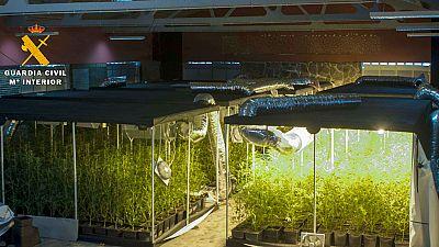 Desarticulan un entramado dedicado al cultivo y tráfico de drogas