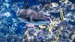 Grandes documentales - Depredadores marinos de Irlanda