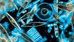 Grandes documentales - Joyas en aguas poco profundas