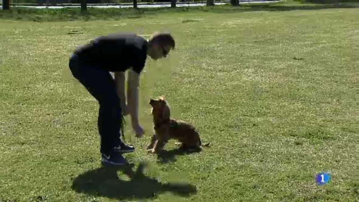 La plataforma Cardegos de Cardedeu reclama a l'ajuntament espais per poder deslligar els gossos