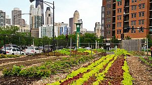 Cultivando la ciudad