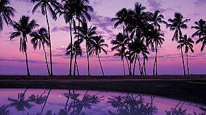 Sabores de Hawai: La magia del Pacífico