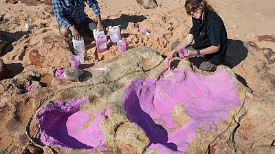 """Un grupo de científicos ha identificado 150 huellas de 21 especies de dinosaurio en un área del noroeste de Australia, ha anunciado la Universidad de Queensland, que ha señalado que se trata de un descubrimiento """"sin precedentes"""",Las pisadas correspo"""