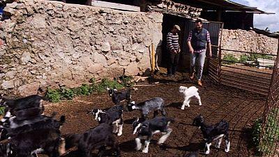 ¡Aprendemos más sobre las cabras!