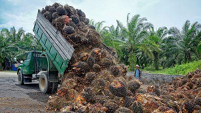 Crecen las voces contra el uso del aceite de palma en los alimentos