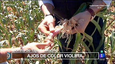 España Directo - Un huerto con ajos de color violeta