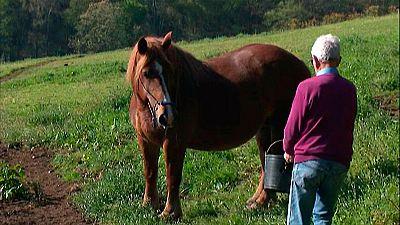 Prisión para ocho personas presuntamente integrantes de una red que vende carne de caballo no apta para el consumo