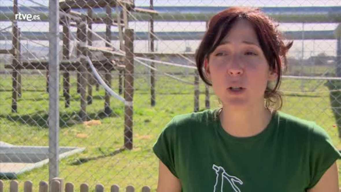 Marta Bustelo, de Rainfer, nos habla sobre el negocio del tráfico ilegal de especies y la protección legal de estos animales
