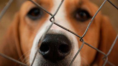 Taxis para adoptar un animal abandonado como alternativa a comprar una mascota