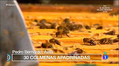 España Directo - En Pedro Bernardo se apadrinan colmenas