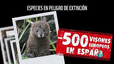 La Aventura del Saber. TVE. Campaña visón europeo WWF