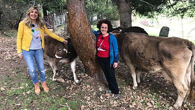 Vacas con acento brasileño