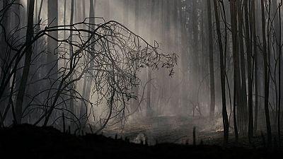 2.000 hectareas han ardido ya en el Bierzo cerca de Ponferrada
