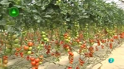 Agrosfera - Laboratorio de ideas - Innovación horticultura