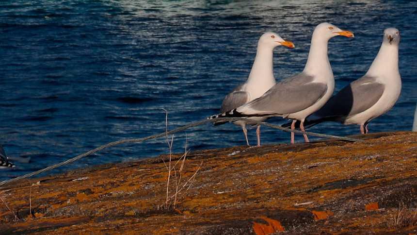 Remite la inestabilidad, con viento fuerte en los litorales