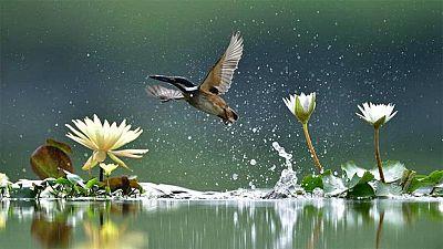 En el día mundial de la Biodiversidad nos recuerdan la importancia de cuidar nuestros entornos naturales y ecosistemas